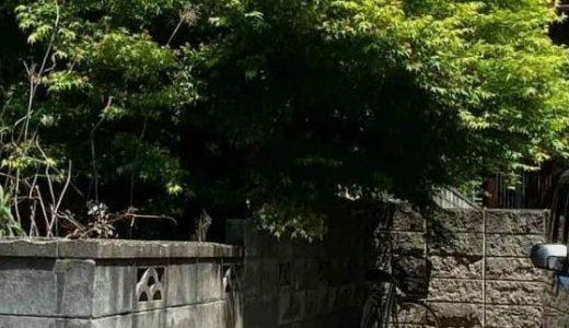 隣地から越境した木の枝を伐採した件